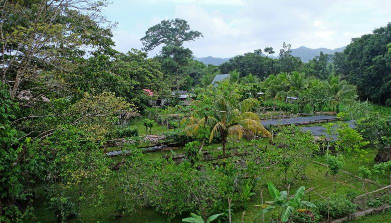 Garten mit Gemüse, Früchten und Kräutern